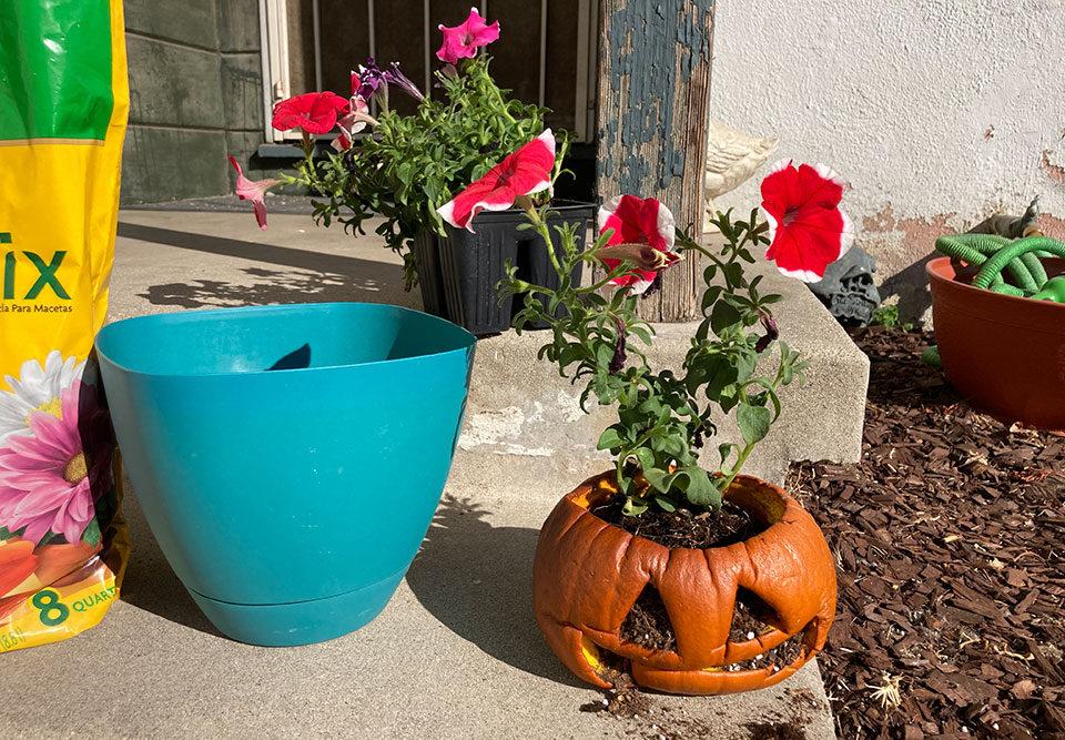 jack-o-lantern flower pot