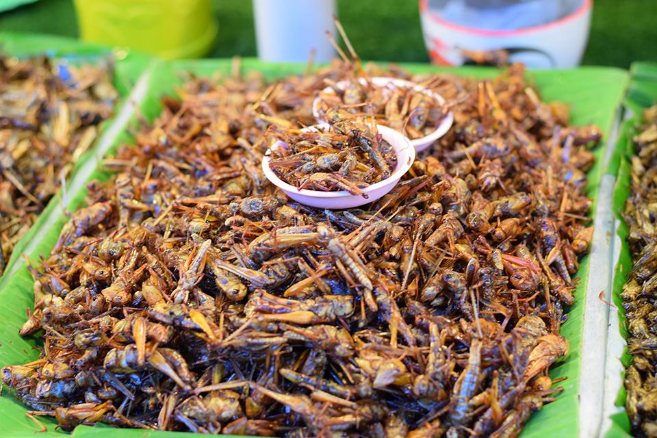 fried crickets in basket